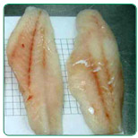 Grouper fillets